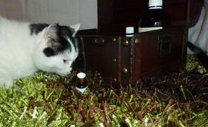 Auch Katzen schnuppern an Aromaöl