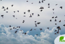 Funkstrahlung beeinflusst Vögel