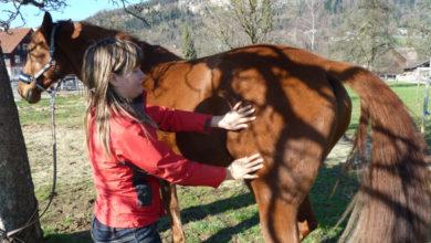 Kinesiologie mit dem Pferd