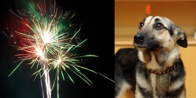 (Haus)Tiere sind in Angst und Panik beim Feuerwerk zu Silvester