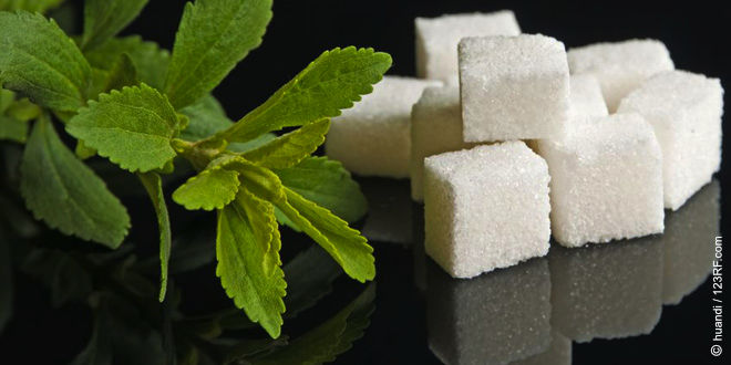 Stevia, der gesunde Zuckerersatz (©123rf.com)