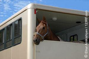 Pferd schaut aus Hänger (©123rf.com)