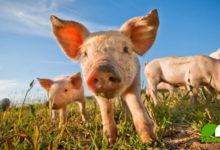 Der Schmäh mit Bioschwein & Co (©123rf.com)