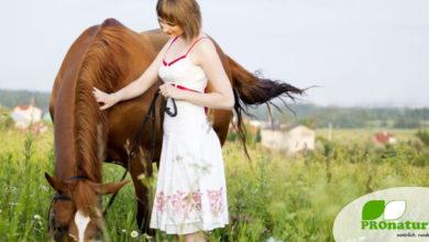 Pferd und Mensch, eine Einheit