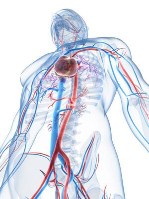 Omega-3 wirkt präventiv vor Herz-Kreislauf-Erkrankungen