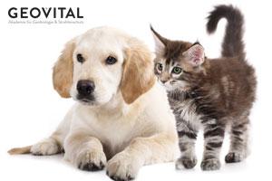 Hunde und Katzen - völlig verschieden