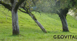 Zu finden in Flora und Fauna. Augen auf für Strahlensucher und Strahlenflüchter!