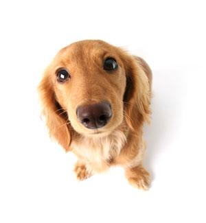 Wenn der Hund den Blick aufsetzt!