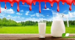 Wenn der Milchpreis und Wettbewerb mit Schmerz, Blut und Tod bezahlt wird (©123rf.com)