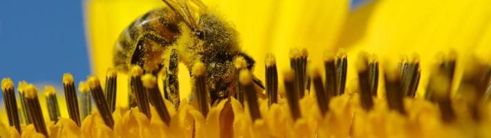 Ohne Bienen gibt es kein menschliches Leben!