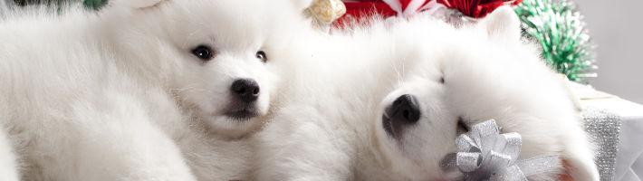 Gesunde Geschenke für den Freund des Menschen - unsere Hunde