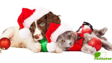 Gesunde Geschenke für unsere tierischen Familienmitglieder - Katze & Hund